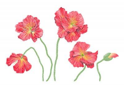 Canvas print Пять красных маков, имитация акварели