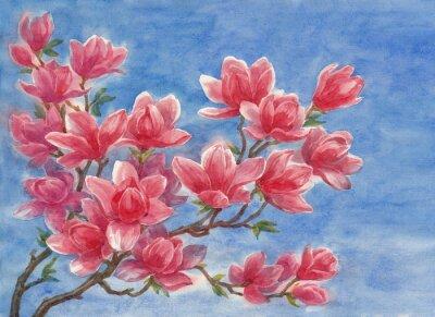 Canvas print Акварель, цветущая магнолия.