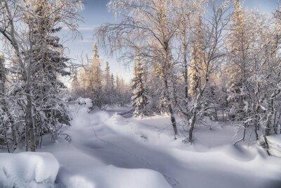 Canvas print Зимняя лесотундра