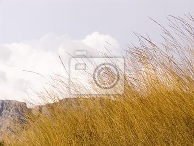 yellow dry grass