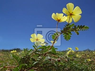 Canvas print yellow flowers