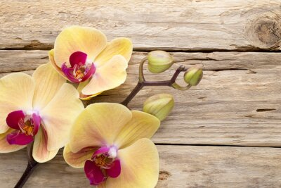Canvas print Yellow orchid.