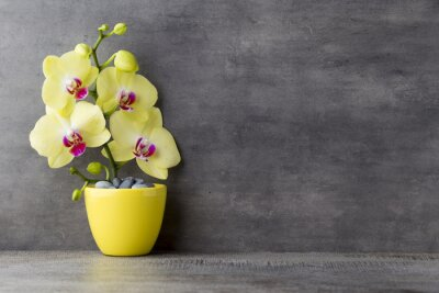 Canvas print Yellow orchid on the grey background.