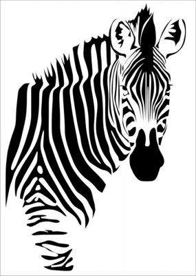 zebra B/N