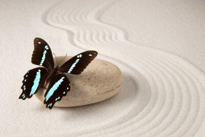 Canvas print Zen butterfly