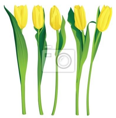 5 yellow tulips