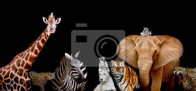 Wall mural A group of animals are together on a black background with text