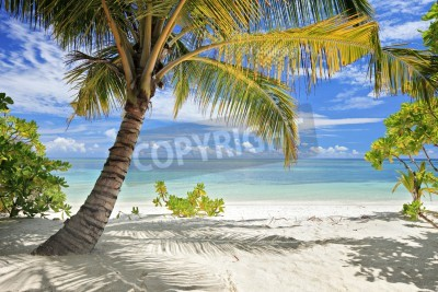 Wall mural A scene of palm trees and sandy beach in Maldives island