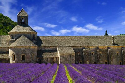 Wall mural Abbey of Senanque and blooming rows lavender flowers. Gordes, Lu