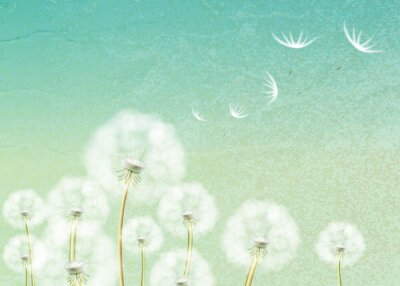 Wall mural Abstract background with flower dandelion