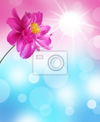 Wall mural abstract background with peony flower