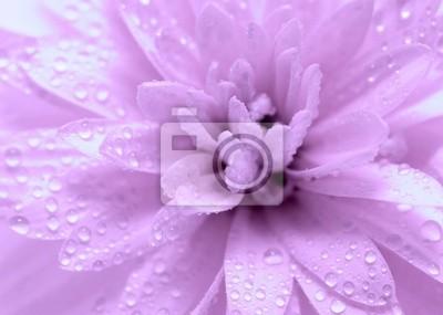 Abstract petals