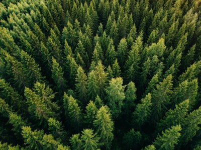 Wall mural Aerial top view of summer green trees in forest in rural Finland.