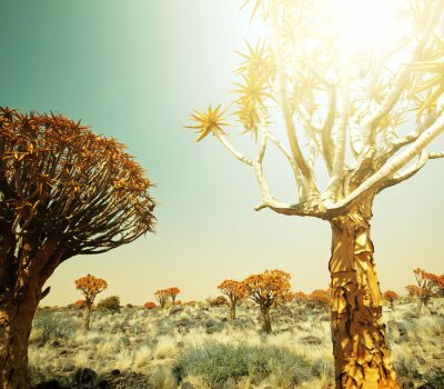 Wall mural African landscapes