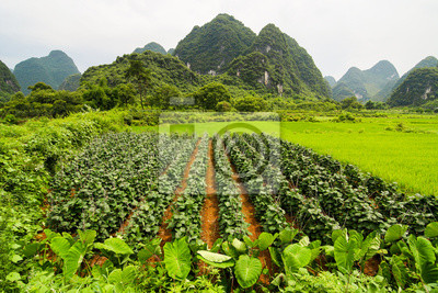 Agriculture and beaturiful karst mountains china