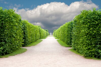 Wall mural alley in the Park with exactly topiary trees