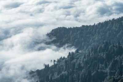 Wall mural Amazing aerial view of cold misty mountains.Cloud and forest landscape