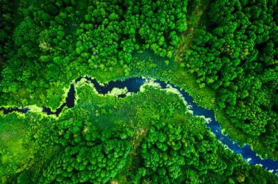 Wall mural Amazing blooming algae on green river, aerial view