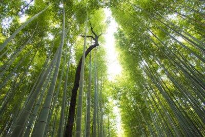 Wall mural arashiyama bamboo forest  in kyoto japan
