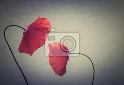 art poppies
