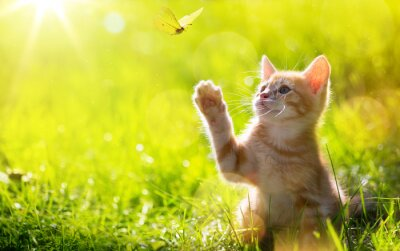 Wall mural art Young cat / kitten hunting a butterfly with Back Lit