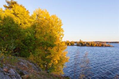 Aspen foliage in autumn colors near lake