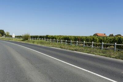 Wall mural Asphalt road near the vineyards