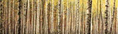 Wall mural autumn birch forest landscape panorama