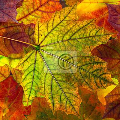 autumn foliage - background