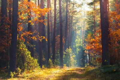Wall mural Autumn forest scene
