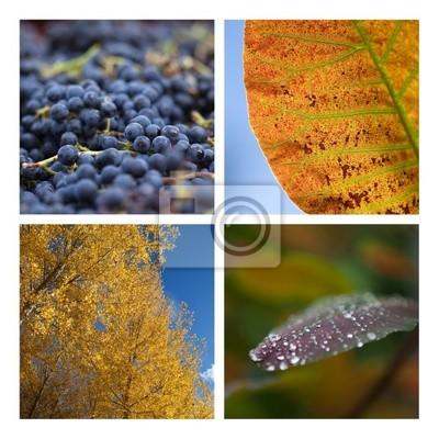 Autumn grape harvest season trees dew Nature