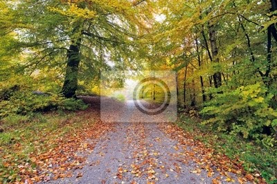 Autumn in the forrest