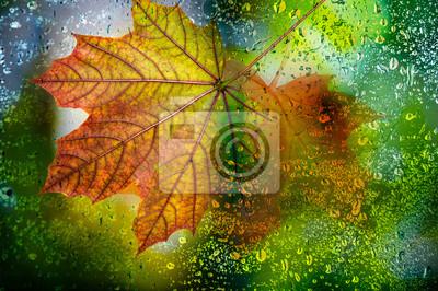 autumn leaf on a dewy background