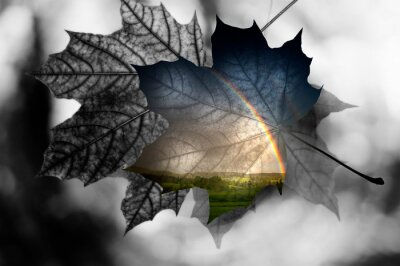 autumn leaf with double exposure with landscale