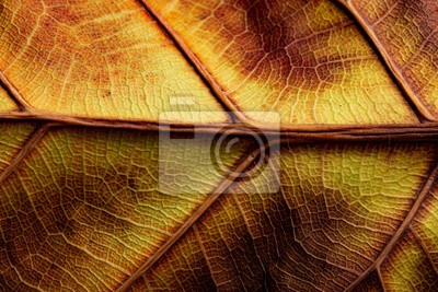 autumn leaf with yellow and brown color close up