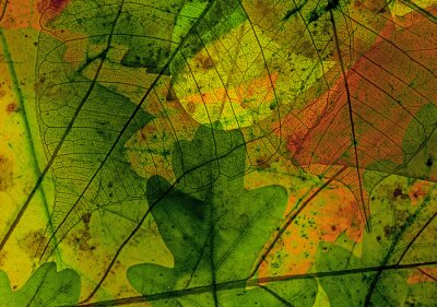 autumn leaves in the detail