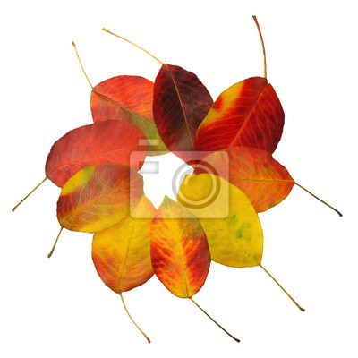 Wall mural Autumn leaves of pear