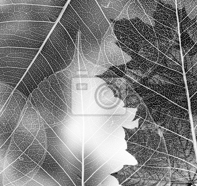autumn maple leaves - black and white picture