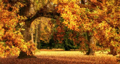 Wall mural Autumn scenery with a magnificent oak tree