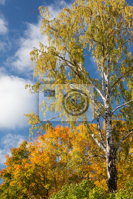 Autumn trees in sunny weather