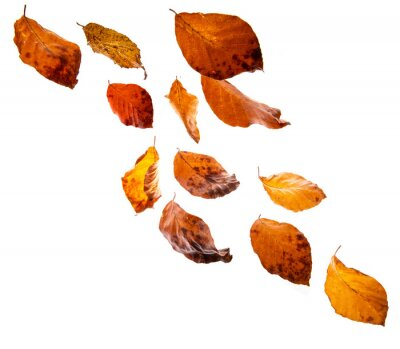 autumnal leaves falling down
