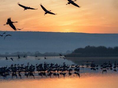 Awakening Birds