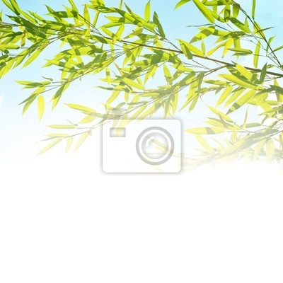 background with bamboo twig