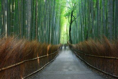 Wall mural bamboo