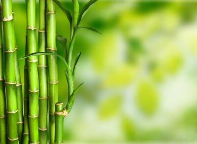 Wall mural Bamboo.