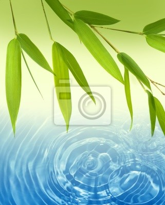 bamboo and water