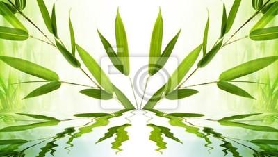 bamboo background symmetry