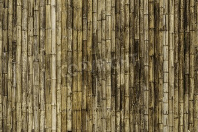 Wall mural bamboo fence background