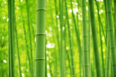 Wall mural Bamboo Forest