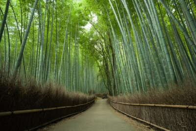 Wall mural Bamboo forest path, Kyoto, Japan